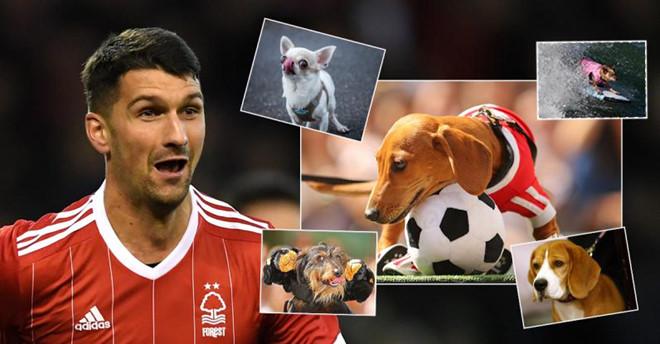 """Lập cú đúp """"quật ngã"""" Arsenal, hậu vệ Nottingham Forest bất ngờ được tặng chó, đặt tên là """"Pháo thủ"""""""