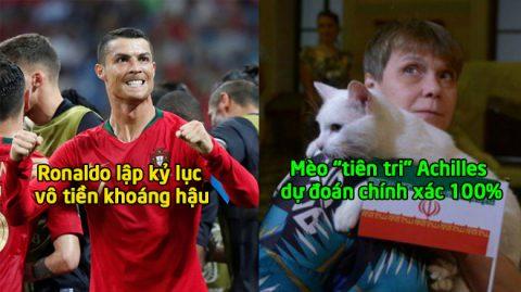"""TIN NÓNG WORLD CUP 16/6: Mèo """"tiên tri"""" dự đoán chính xác 100%; Ronaldo lập kỷ lục vô tiền khoáng hậu"""